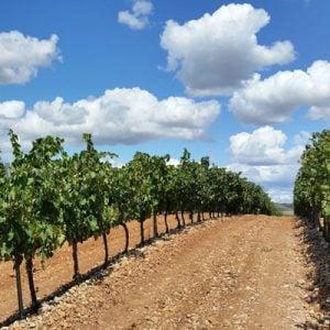 Vin fra Rioja, Spanien