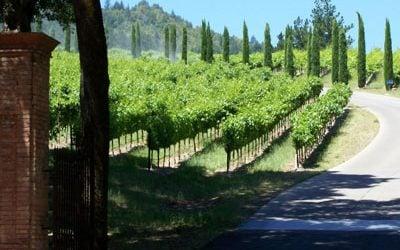 Vin fra Napa Valley