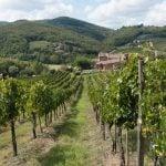 Vin fra Chianti