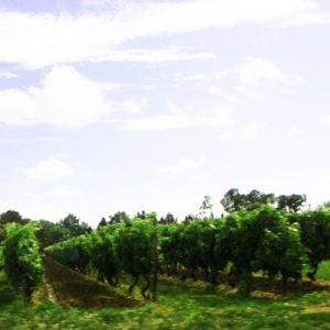 Vin fra Bordeaux - Frankrig