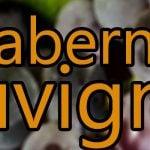 Vin med Cabernet Sauvignon druen