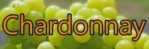 Vin med Chardonnay druen
