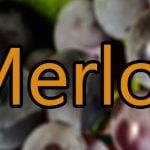 Vin med Merlot druen