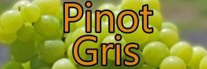 Vin med Pinot Gris druen