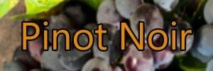 Vin med Pinot Noir druen