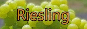 Vin med Riesling druen