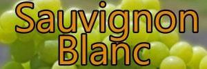 Vin med Sauvignon Blanc druen