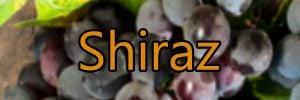 Vin med Shiraz druen