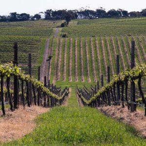 Vin fra McLaren Vale