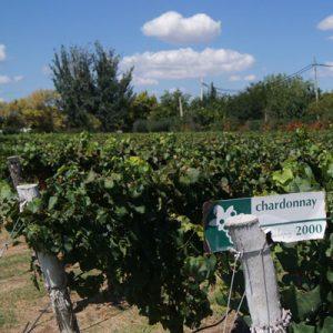 Vin fra Mendoza