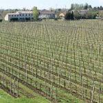 Vintur og vinsmagning i Valpolicella