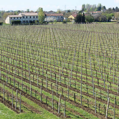 Vin fra Valpolicella