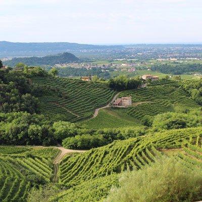 Vin fra Veneto, Italien